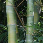 Закладка Бамбук